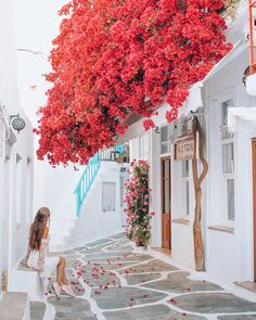 Mýkonos, Kikladhes, Greece with Takeoff With Love, Mykonos and Greece Greece Vacation, Greece Travel, Vacation Travel, Greece Photography, Travel Photography, Macro Photography, Photography Photos, Wildlife Photography, Maternity Photography