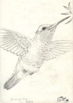humming_bird_2_by_smok15.jpg (1664×2366)