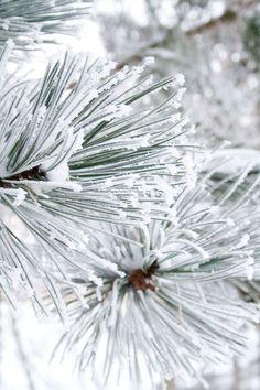 Snow ★ iPhone wallpaper