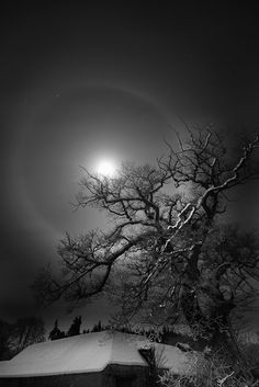 Colin Cambell Bruiach// a ring around the moon