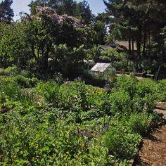 Findhorn gardens