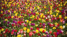 flower wallpaper - Buscar con Google