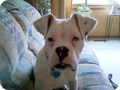 Jada is available for adoption from Wags & Whiskers Animal Rescue of MN.  www.WagsMN.org
