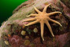 Oceana lanza una campaña para preservar los mares     http://www.vistaalmar.es/hablame-del-mar/articulos/oceana-lanza-una-campana-para-preservar-los-mares/