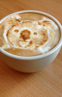 Koala Bear Latte Art