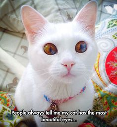 There Is A Universe In Those Eyes ~ What a pretty kitty!