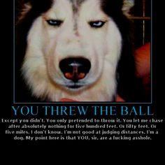Pet humor This is Koko!