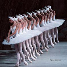 Corps de ballet-     Swan Lake