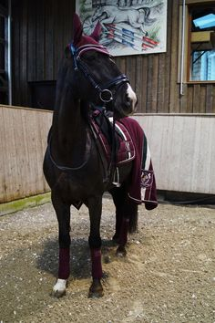 This is my beautiful horse Nighthawk he is 4 and has a temper and he gets angry easily but I'm training him he can jump 9 feet which is pretty good for a four year old-Julia