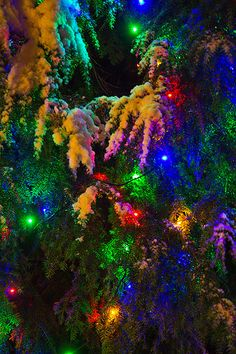 Snow covered Christmas lights