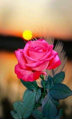 Amazing Flowers, Beautiful Roses, Beautiful Gardens, Green Nature Wallpaper, Flower Wallpaper, Beautiful Flowers Wallpapers, Coming Up Roses, Colorful Roses, Love Rose