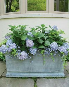 Blue and Green Container Plantings with Hydrangeas