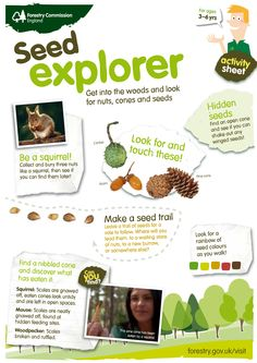 Become a seed explorer! Download our activity sheet for some autumn fun with the kids. http://www.forestry.gov.uk/forestry/INFD-9ALHFP.