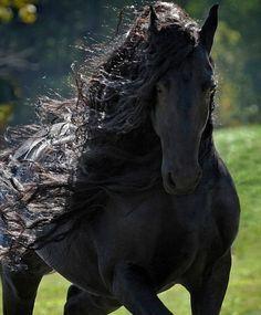 2016-06-02 00_40_47-Er gilt als das schönste Pferd der Welt_ Seine Eleganz ist unbeschreiblich - Kli