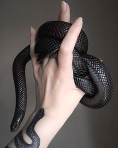 Le plus récent Photos animales Reptiles Stratégies Les Reptiles, Cute Reptiles, Reptiles And Amphibians, Pretty Snakes, Beautiful Snakes, Pretty Animals, Cute Animals, Beaux Serpents, Mexican Black Kingsnake