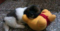 Winnie the Pooh... TOO CUTE!!