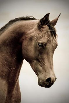 Horse / Stunning head shot