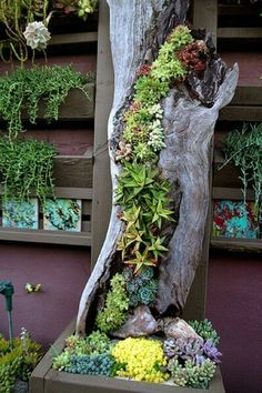 30 Captivating Backyard Succulent Gardens You Can Easily DIY. These succulent gardens are so easy to make and are beautiful! Try growing your own succulent garden! Succulent Gardening, Garden Planters, Container Gardening, Garden Art, Vegetable Gardening, Organic Gardening, Garden Shrubs, Succulent Ideas, Gardening Hacks