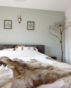New bedroom inspiratie cosy Ideas Feature Wall Bedroom, Bedroom Wall Colors, Accent Wall Bedroom, Master Bedroom, Sage Green Bedroom, Sage Green Walls, Green Accent Walls, Bedroom Inspo, Bedroom Decor