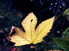 #nature #leaf #memory #love #pure #amazing #beauty #nice #green #yellow #magic #art #night #photography #photos R❤️Y