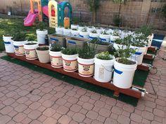 13 Creative and Innovative rain Gutter Garden Ideas Self watering rain gutter garden Gutter Garden, Veg Garden, Veggie Gardens, Garden Fun, Garden Trellis, Garden Path, Bucket Gardening, Gardening Tips, Urban Gardening
