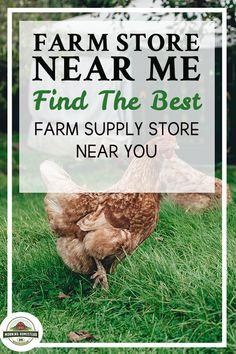 Rabbit Food List, Best Rabbit Food, Raising Cattle, Flower Gardening, Vegetable Gardening, Farm Lifestyle, Rabbit Garden, Rabbit Breeds, Homestead Farm
