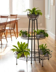 Vintage style fully round tall plant stand complements any decor. Space-saving design with compact footprint. Short Plants, Tall Plants, House Plants Decor, Plant Decor, Tall Plant Stands, Metal Plant Stand, Outdoor Plant Stands, Garden Plant Stand, Balcony Garden