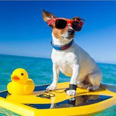 Surfs up, dude!