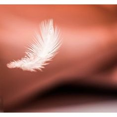 Just before it landed part 2/2.  Could'nt decide which one is better ended up with a double post   #photography #photo #picoftheday #capture #l0tsabraids #doublepost #photographyislifee #photographyislife #art #135mm #macro #bokeh #instagood #instalike #follow #canon #feathers #pink #featureme # #shot #shotoftheday #WhatsUpLebanon#timing #yesthatismybestpic #ftwotw #giveusurbestjpeg by roy.bd