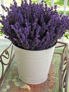 Lavender..when I was in France, thw house we rented had lavender plants in the backyard. And once a week the housekeeper would take some clipping and bring the fresh lavender into the house. It was amazing!