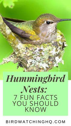 Hummingbird Migration, Hummingbird Nests, Hummingbird Plants, Hummingbird Meaning, Hummingbird House, How To Attract Hummingbirds, How To Attract Birds, Humming Bird Feeders, Humming Birds