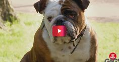 Dogs Get Pranked And It's Hilarious! | Rare