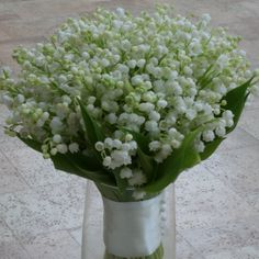 Beautiful scented lily of the valley