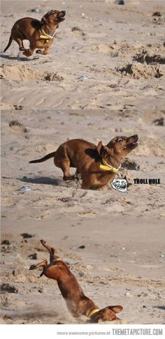 I can totally hear the music in the background as this dog does a airborne faceplant...