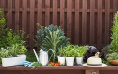 Home visit: grown your own food
