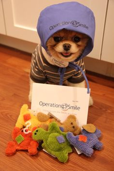 Boo the dog operation smile - Look at how adorable that face is, priceless