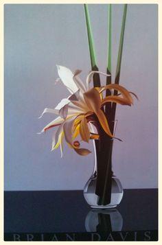 BRIAN DAVIS - WHITE EPIPHYLLUM  36X24 POSTER #Realism #Floral