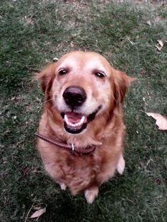 Perro sonriente