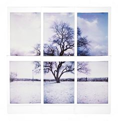 https://flic.kr/p/jK1uau | Winter Tree | Diana F+ with polaroid back See summer version Summer_Tree  If you want you can follow me on Facebook