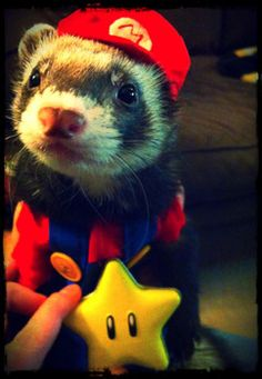 The cutest Mario cosplayer ever. This looks like my ferret! :)