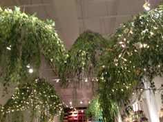 Hanging Ferns and Fairy Lights