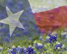 Texas dreaming...