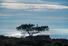 Torrey Pines Silhouette     |      Aaron Chang     |      Fine Art Photography