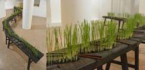 Qiu Zhujie - curator / concept designer for the Shanghai Biennale in 2013