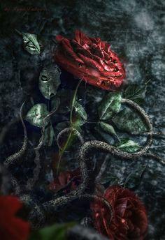 Gothic rose by IgnisFatuusII on deviantART (ignisfatuusii.deviantart.com)