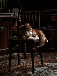 His feline companion Jagger. This long haired male had a good heart; and phenomenally attractive aesthetic.