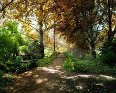 benches in the forest - Bing Images