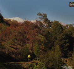 Rumbo al Bosque Santiago