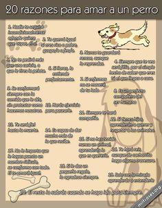 ¡Buenos y caninos días! 20 razones para amar a un perro y para asistir a DESPEGA.