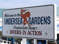 The Undersea Gardens  Newport OR